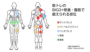 筋トレの BIG3+懸垂・腹筋で 鍛えられる部位